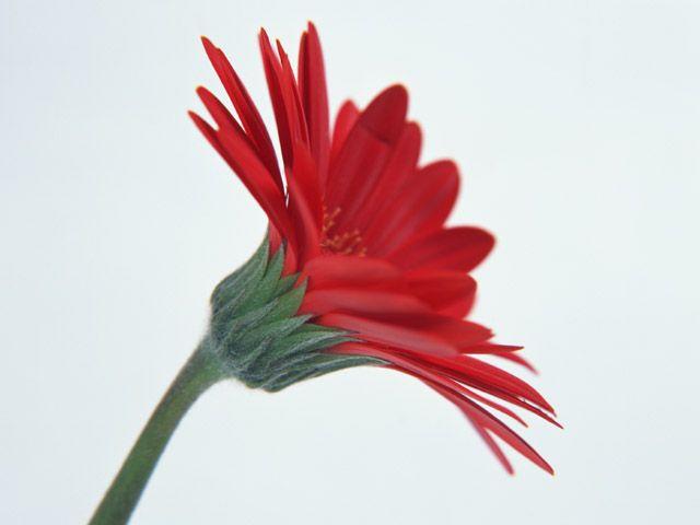 FLOWERS・SHALIMAR